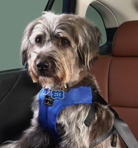 Subaru pet accessories of a small dog harness.